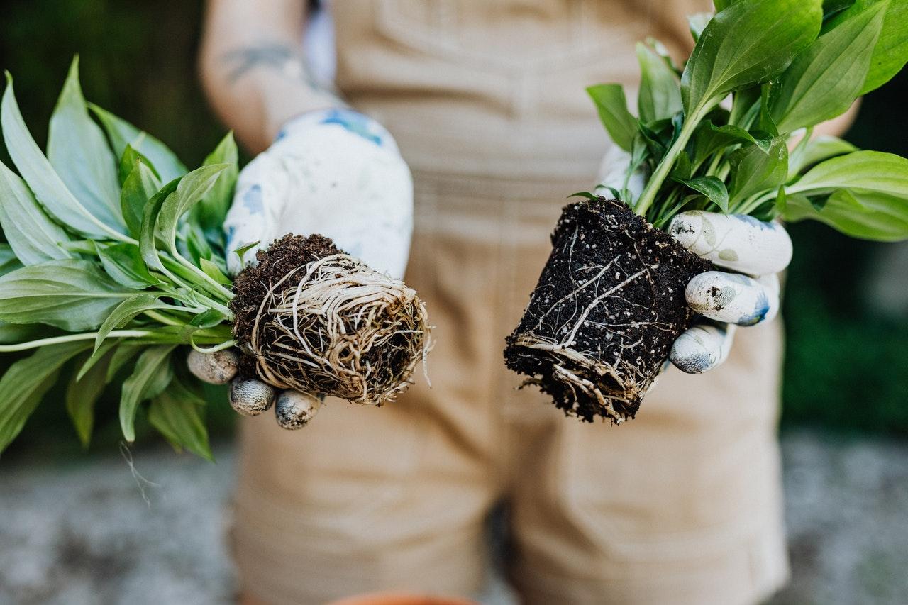 playenses start urban reforestation project